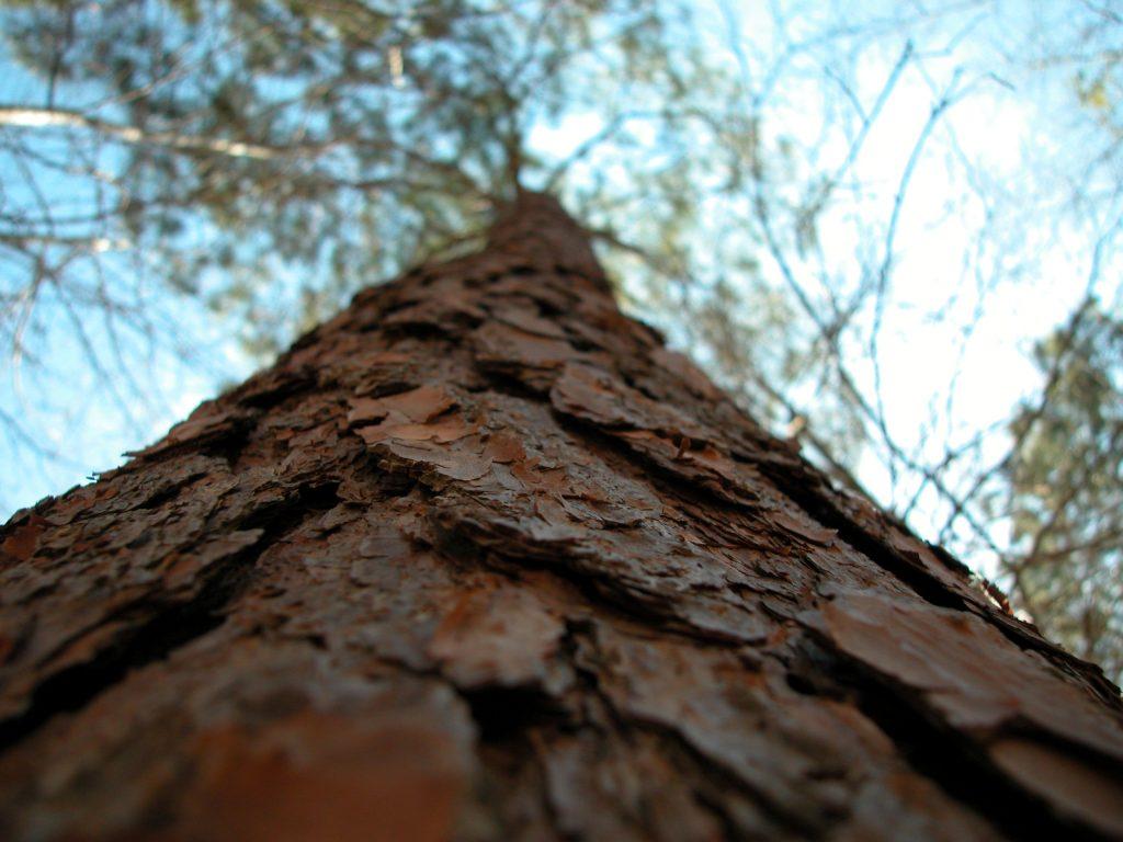 tree-845006