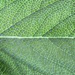 Clorofila que te quiero verde
