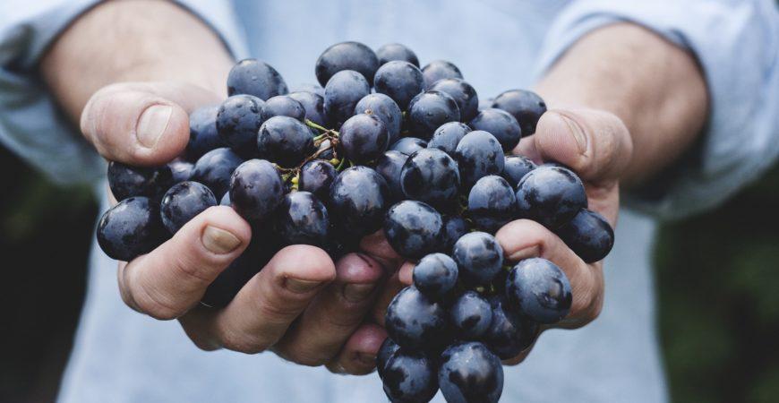Los herbicidas y pesticidas, el experimento en nuestra alimentación