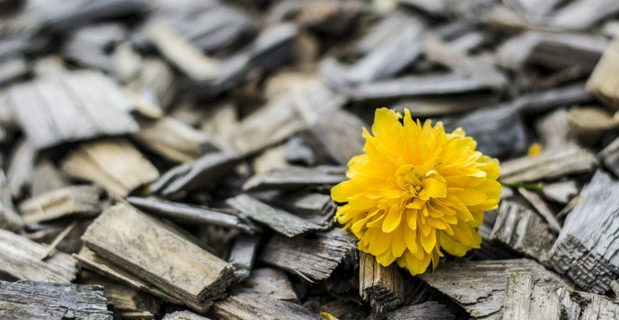 Primavera, más madera